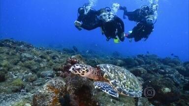 Grazi e Angélica se divertem em mergulho - Atriz faz seu batismo de mergulho nas águas de Noronha