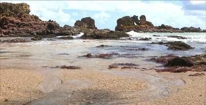 Conheça as belezas do Litoral Sul da Paraíba - No caminho tem pedras em formatos curiosos, falésias e praias paradisíacas.