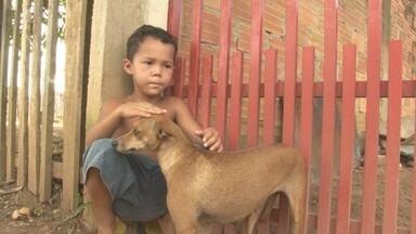 Menino que ficou preso em buraco de fossa e foi salvo por cadelinha reencontra o animal - Rondônia TV mostra o reencontro de Hugo Gabriel, de 4 anos, com a cadelinha Pipoca.
