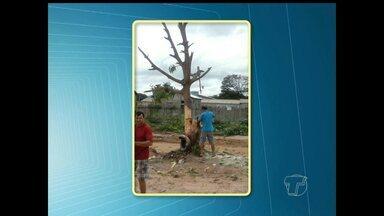 Moradores denunciam corte de árvore em via pública de Santarém, PA - Segundo a Semma, responsável pelo corte pode ser multado. Órgão vai apurar se corte não teve ordem de serviço.