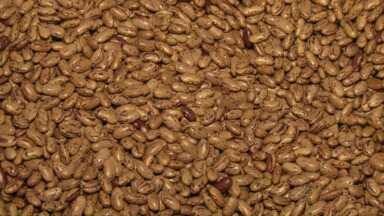 Preço do feijão sobe e cresce a procura por sementes - Mas grãos estão em falta no mercado