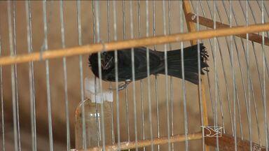 Dois homens foram presos por suspeita de tráfico de animais silvestres no Maranhão - Dois homens foram presos por suspeita de tráfico de animais silvestres no Maranhão