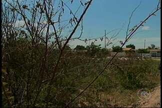 Moradores da Avenida 1, no bairro Pedra Linda reclamam do matagal em frente às residências - Ele falam que tem muito assalto por lá e também bichos peçonhentos.