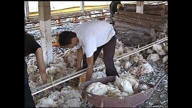 Apagão estraga parte de produção de leite em Itapetininga - O apagão de segunda-feira (19) em várias capitais e cidades da região causou transtornos. Em Itapetininga (SP), parte do leite produzido em uma propriedade rural azedou. Cerca de 500 litros de leite da produção estragaram por falta de refrigeração.