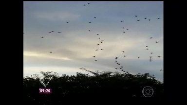 Invasão das aranhas! Moradores de Aparecida sofrem com elas - Fato acontece em distrito de São Miguel, São Paulo