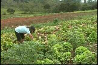 Estiagem causa prejuízos aos produtores rurais de Divinópolis - Pequenos agricultores não descartam possibilidade de parar cultivo. Segundo secretaria, 20% dos produtores de hortaliças desistiram de plantar