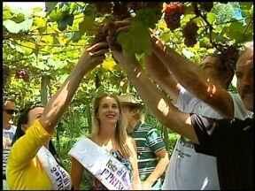 Passeio é convite para conhecer tradições - A festa Di Bacco de Erechim, RS conta com várias atrações diferentes, uma delas é um passeio pelas propriedades rurais da cidade para aproveitar a safra da uva.