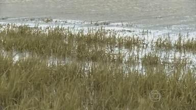 Excesso de chuva afeta a produção de arroz no Rio Grande do Sul - Com a chuva, o Rio Uruguai avançou e destruiu lavouras de arroz. Toda essa cheia provocou perda de 17 mil hectares em Uruguaiana (RS).