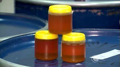 Apicultores de Simplício Mendes comemoram produção de mel recorde dos últimos 4 anos - Apicultores de Simplício Mendes comemoram produção de mel recorde dos últimos 4 anos
