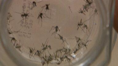 Em dois meses, DF tem mais de 200 casos de dengue confirmados - A chuva aumenta os riscos de transmissão da dengue e da febre chikungunya, transmitidas pelo mosquito Aedes aegypti. Nesta terça-feira (3), militares do Exército começam a ser treinados para combater o inseto no Distrito Federal
