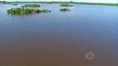 Pescadores começam a sentir os primeiros sinais da decoada - O fenômeno natural acontece quando a matéria orgânica nos rios começam a se decompor, reduzindo o nível de oxigênio na água