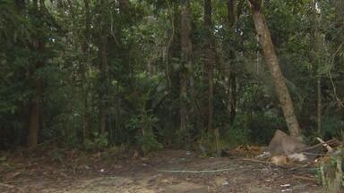 Famílias localizam jovens após desaparecimento em reserva no AM - Grupo entrou em reserva florestal na tarde de sexta-feira (13). Bombeiros souberam de reaparecimento ao iniciar resgate neste sábado (14).