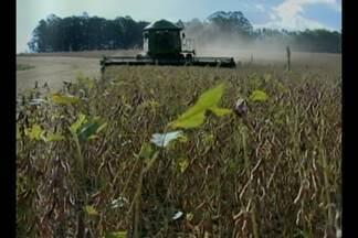 Colheita das lavouras de soja atinge 65% na área de Tupanciretã, RS - Produtividade caiu nos ciclos médios e tardios.