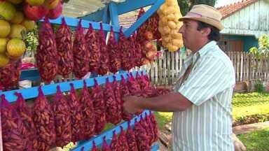 Assista ao 1º bloco do Caminhos do Campo do dia 12 de Abril de 2014 - Aberta temporada de colheita e comercialização do pinhão no Paraná