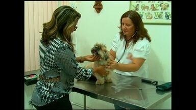 Clínica veterinária aposta na gestão de negócios e aumenta clientela - A empresária de Aracaju fez mudanças, conseguiu crescimento e inovou, após participar do programa Agentes Locais de Inovação.