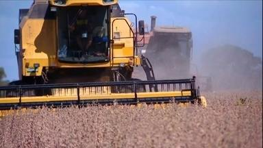 Rio Grande do Sul deve colher mais uma supersafra de grãos - Com quase 30 milhões de toneladas, soja deve crescer 10% no estado.