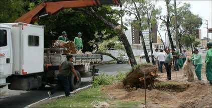 Árvores serão transplantadas em João Pessoa - Foi preciso retirar trinta e duas árvores para as obras da Avenida Beira Rio, que devem começar no segundo semestre. Dezesseis árvores foram transplantadas para a Rua do Capim.