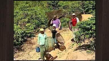 Vizinhos ajudam em colheita de agricultor doente, no ES - Os pés de café estavam carregados e a família impossibilitada de fazer a colheita.
