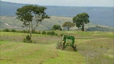 Falta de chuva no ano passado e excesso neste ano afetam safra de soja em MG - No Sul do estado, os produtores correm para colher os grãos, que já deveriam ter sido exportados.
