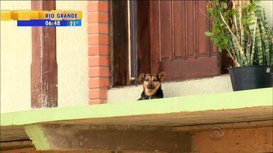 Quatro pessoas são denunciadas pela morte de animais em Bom Jesus, RS - Vereador da cidade pagou fiança e deixou a cadeia.