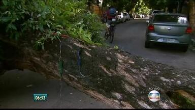 Árvore cai e estoura cano na Rua da Amizade, no Recife - Moradores contam que árvore estava há anos sem poda.