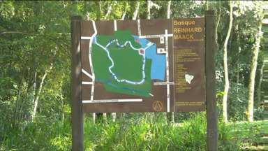 Bosque, em Curitiba, é ponto de encontro de famílias no fim de semana - Conheça o Bosque Reinhard Maack.