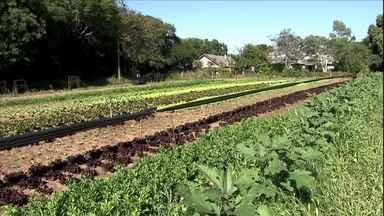 Cultura orgânica substitui adubo químico por naturais - É possível fornecer os nutrientes necessários à agricultura usando fontes naturais.