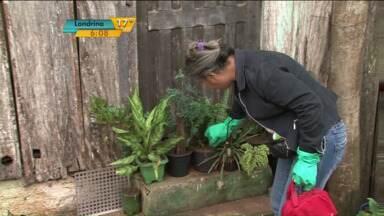 Cianorte entra na lista das cidades com epidemia de dengue - Já são 289 casos confirmados da doença na cidade. Município pediu ajuda ao Governo do Estado.
