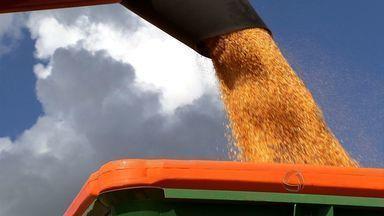 Fórum discute etanol de milho e sorgo em Brasília - O avanço deste segmeto caminha a passos lentos na avaliação dos produtores.