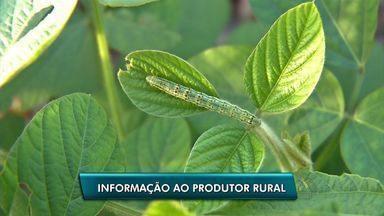 Caravana da Embrapa vai levar conhecimento para produtores rurais - Caravana da Embrapa vai levar conhecimento para produtores rurais no interior do estado