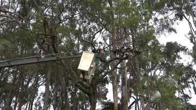 Tempo chuvoso aumenta os riscos de quedas de árvores em Salvador - A capital baiana tem cerca de um milhão de árvores; saiba o que pode ser feito para evitar acidentes.