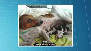 Filhotes de cadela baleada morrem - Segundo a ONG que cuidava dos filhotes, houve necessidade de incubadoras e, em Maceió, nenhuma clínica dispõe do serviço.
