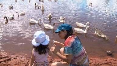 Animais ganham destaque no parque da cidade - Carpas gigantes e coloridas, gansos, patos e outros animais animam o parque da cidade. Crianças se divertem com as aves do parque,