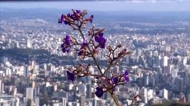 Parque Serra do Curral tem programação especial do Dia Mundial do Meio Ambiente - No Dia Mundial do Meio Ambiente, o parque, cartão postal de Belo Horizonte, tem ações especiais. Entre elas, o lançamento de um aplicativo para ajudar os visitantes.
