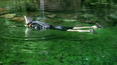 Hoje é dia de ecoturismo: Flutuação - Alexandre Henderson vai a Bonito (MS) explorar diferentes aspectos do ecoturismo.