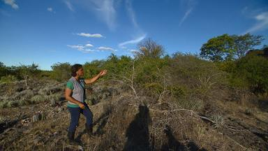 Caatinga baiana abriga o mais antigo sítio arqueológico das américas - Veja na nova série especial do Bahia Rural.