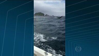 Baleias aparecem na Barra da Tijuca - Duas baleias da espécie jubarte apareceram na Barra da Tijuca. Os animais chamaram atenção de quem passava pelo local.