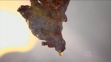 Nutricionista tenta deixar o churrasco da família Silva mais magro - A família Silva mora na Região Metropolitana de Goiânia e adora um churrasco. Uma pesquisa do Ministério da Saúde diz que o morador dessa região é o que mais come carne com gordura no país.