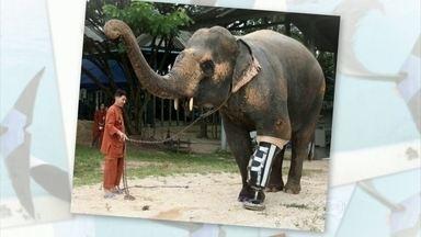 Veja outros animais que usam próteses e acessórios para locomoção - Jack e Marley se adaptaram rapidamente à cadeira de rodas