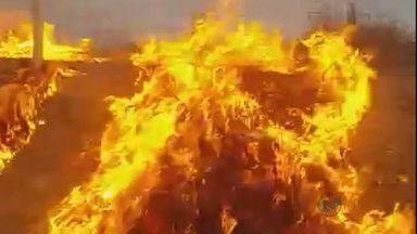 Moradora flagra homem provocando queimada em Varginha (MG) - Moradora flagra homem provocando queimada em Varginha (MG)