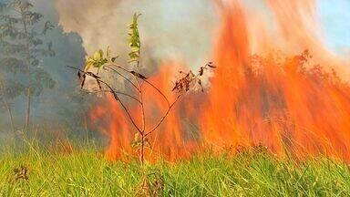 Queimadas na zona rural estão proibidas até setembro em MT - Tempo seco e vegetação seca aumentam riscos de fogo na zona rural. Alerta redobrado com a fumaça nas rodovias.