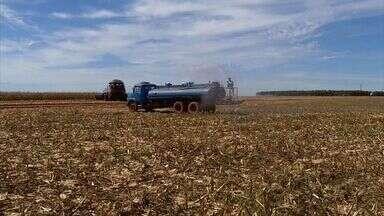 Riscos de incêndios na zona rural fazem produtores reforçarem prevenção - Palhada seca, sol e ventos fortes aumentam riscos de incêndios. Prevenção é a palavra de ordem em muitas fazendas.
