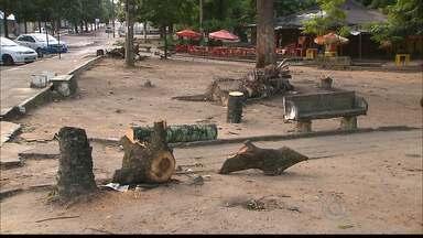 Prefeitura de João Pessoa retira sete árvores que ameaçavam cair na Lagoa - As árvores apresentavam risco de tombamento e tiveram que ser retiradas do local. Novas espécies serão replantadas no projeto de revitalização da Lagoa.