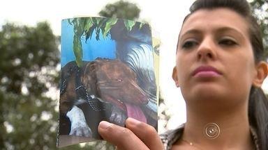 Cachorro da raça pit bull é torturado e morto a tiros em Alumínio - Os suspeitos de matar o cão em Alumínio (SP) são dois homens, um deles é um policial militar aposentado. Eles disseram a polícia que o animal tentou atacar um gato e uma criança.