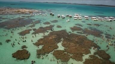 Repórter mostra bastidores da viagem à Maragogi (AL) - O repórter Fabiano Villela, de Belém, no Pará, foi conhecer as praias de Maragogi para mostrar as belezas da região.