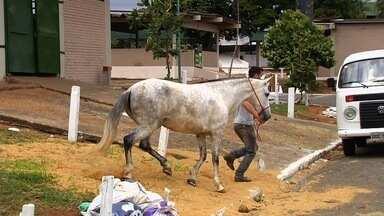 Agrodefesa identifica dois novos casos de mormo em Goiás - Trabalho do órgão no momento é para controlar o avanço da doença nos cavalos.