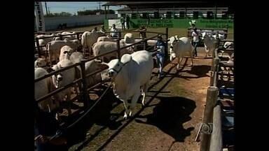 Arroba do boi gordo sofre queda em Goiás - Entretanto, fator não desmotivou pecuaristas do sudeste do estado, onde acontece a Exposição Agropecuária de Catalão.