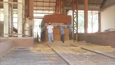 Excesso de grãos reflete no armazenamento do milho safrinha em MS - A colheita está em pleno andamento no estado, onde as chuvas atrapalharam a produção
