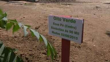 Projeto busca revitalizar área do açude de Boqueirão - Voluntários plantam mudas em torno do reservatório