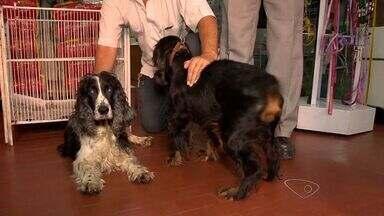 Animal: pessoas abandono de cães é problema comum no ES - Animal que foi abandonado em pet shop foi resgatado pela dona, que disse que a cunhada abandonou o cão.
